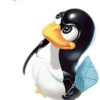 Web Hosting Operating Systems: Unix & Windows